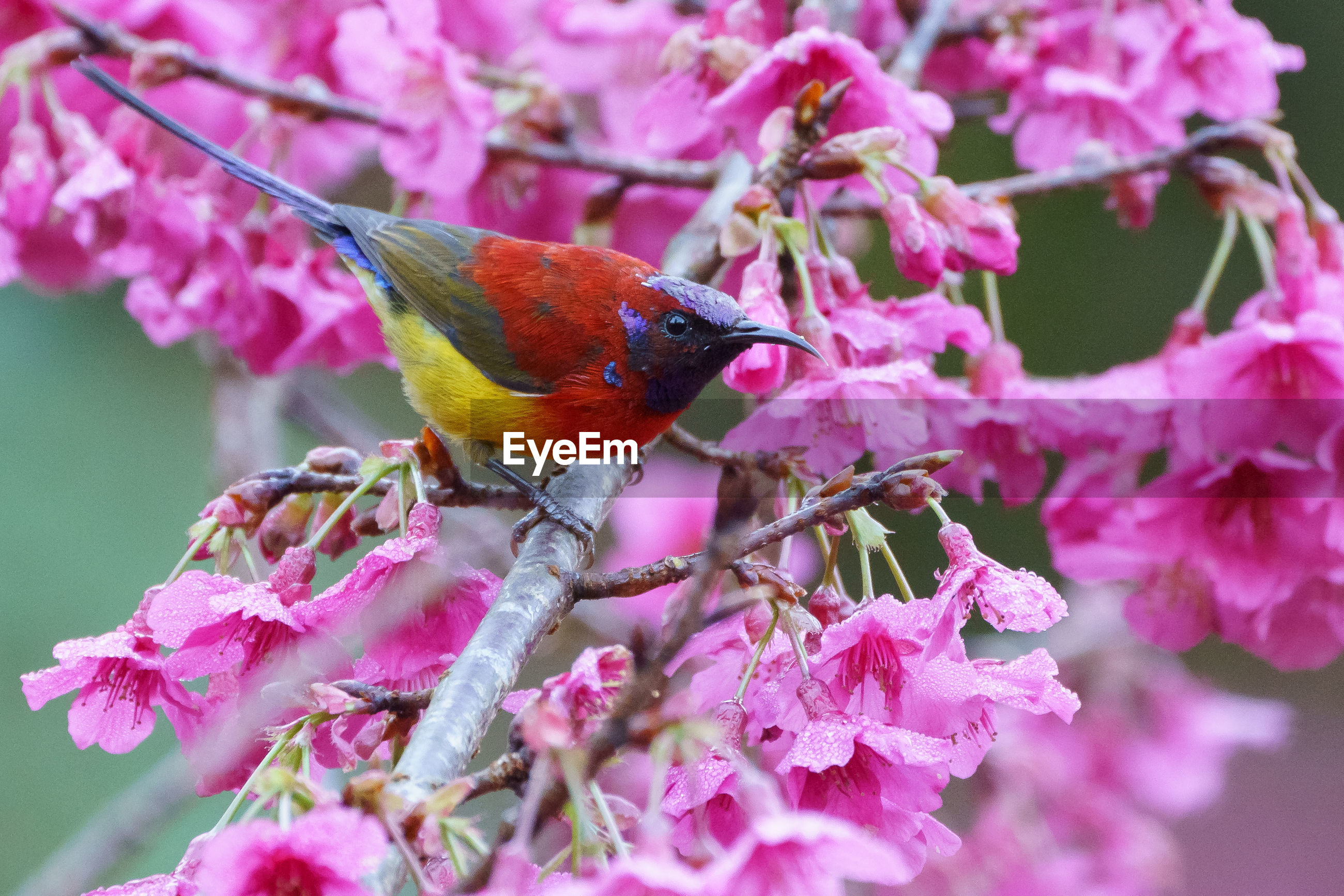 Close-up of bird perching on blooming flowers