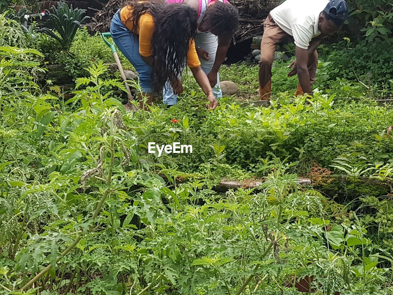 real people, togetherness, agriculture, growth, day, field, men, vegetable, casual clothing, working, women, lifestyles, outdoors, plant, farmer, nature, standing, rural scene, food, healthy eating, freshness, friendship, volunteer, adult, people