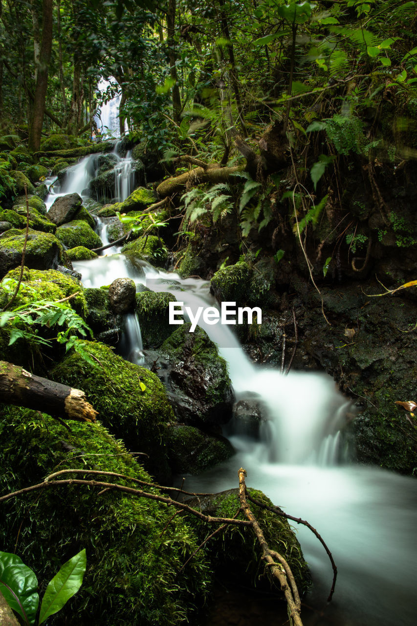 water, tree, forest, long exposure, waterfall, plant, motion, flowing water, scenics - nature, blurred motion, beauty in nature, nature, rock, land, flowing, no people, solid, rock - object, day, rainforest, outdoors, falling water, stream - flowing water, power in nature