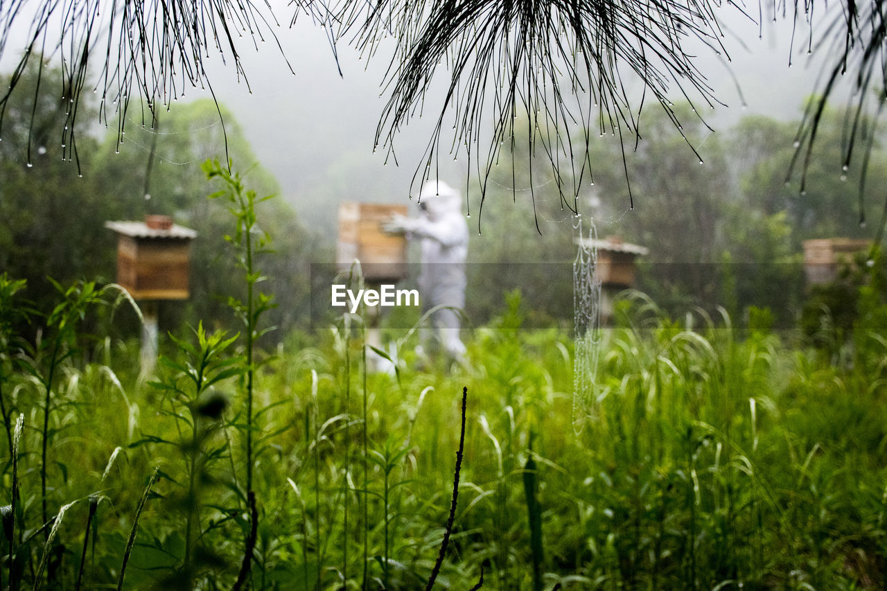 Side View Of Beekeeper Holding Beehive Amidst Plants During Rainy Season