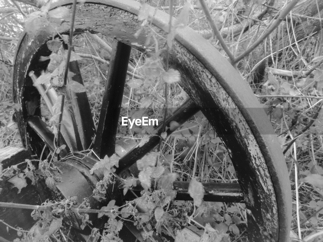 abandoned, wheel, no people, leaf, plant, close-up, day, outdoors