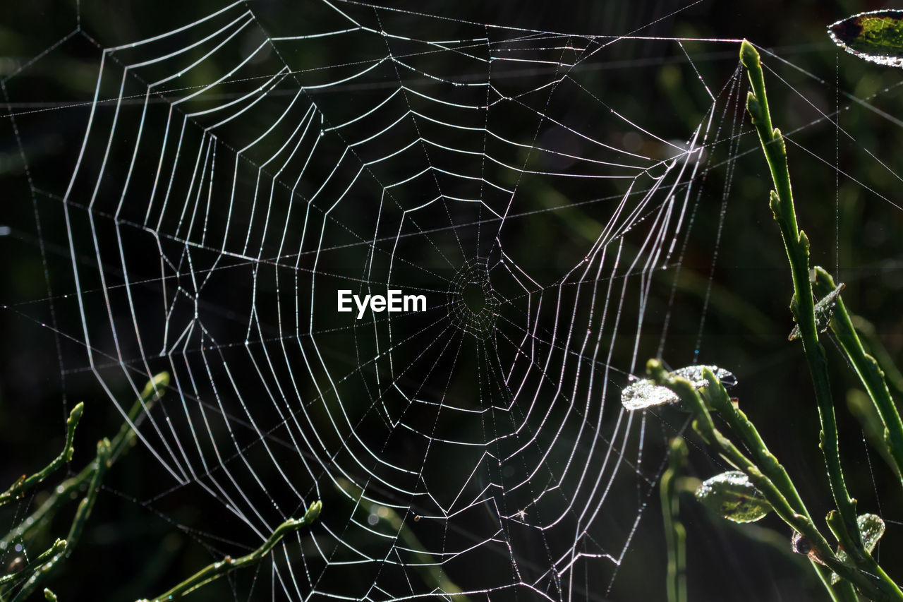 spider web, web, spider, nature, focus on foreground, close-up, fragility, outdoors, no people, intricacy, complexity, beauty in nature, day, animal themes, trapped