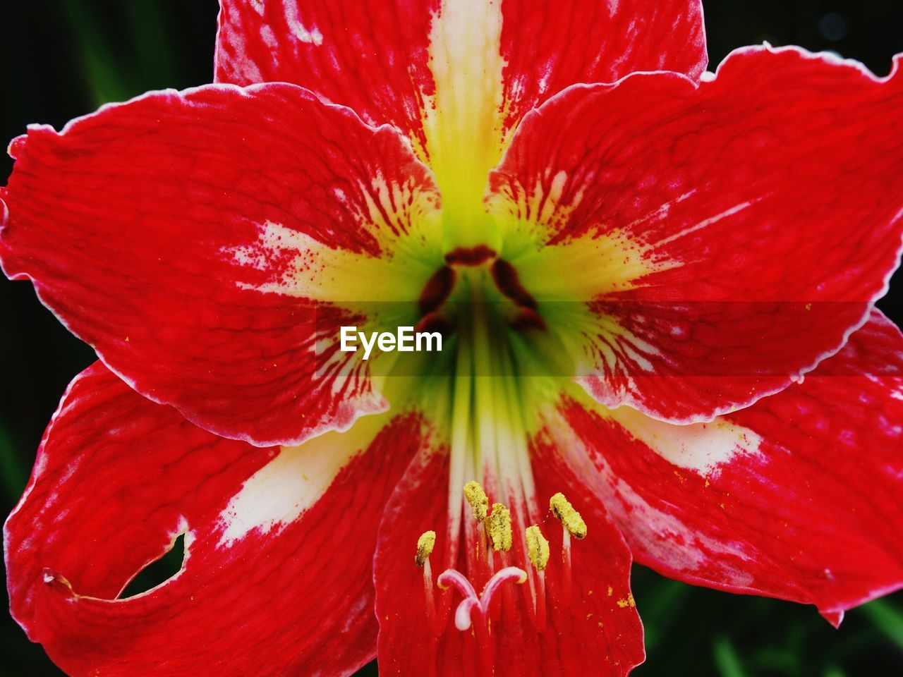 flower, fragility, petal, freshness, beauty in nature, red, nature, growth, flower head, close-up, stamen, plant, pollen, day, outdoors, no people, springtime, hibiscus, blooming