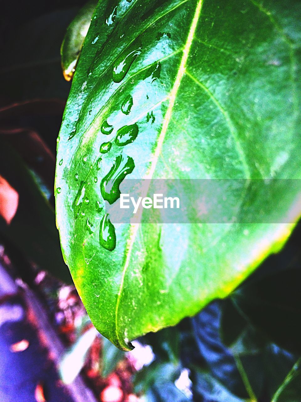 green color, close-up, plant part, plant, leaf, growth, nature, no people, freshness, water, drop, wet, focus on foreground, beauty in nature, day, outdoors, green, purity, animal, dew, leaves, raindrop