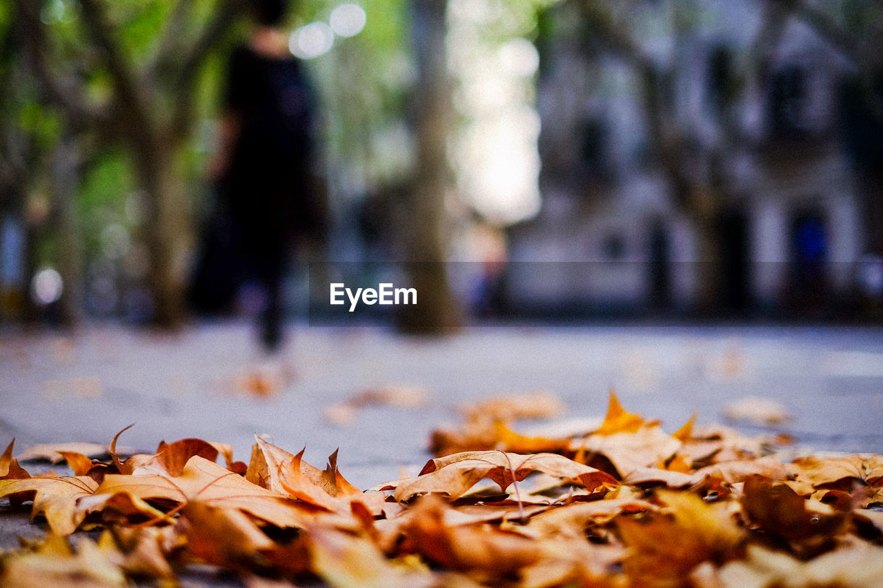 autumn, leaf, change, dry, leaves, fallen, maple leaf, nature, selective focus, maple, surface level, outdoors, day, no people, close-up, beauty in nature, fragility, tree