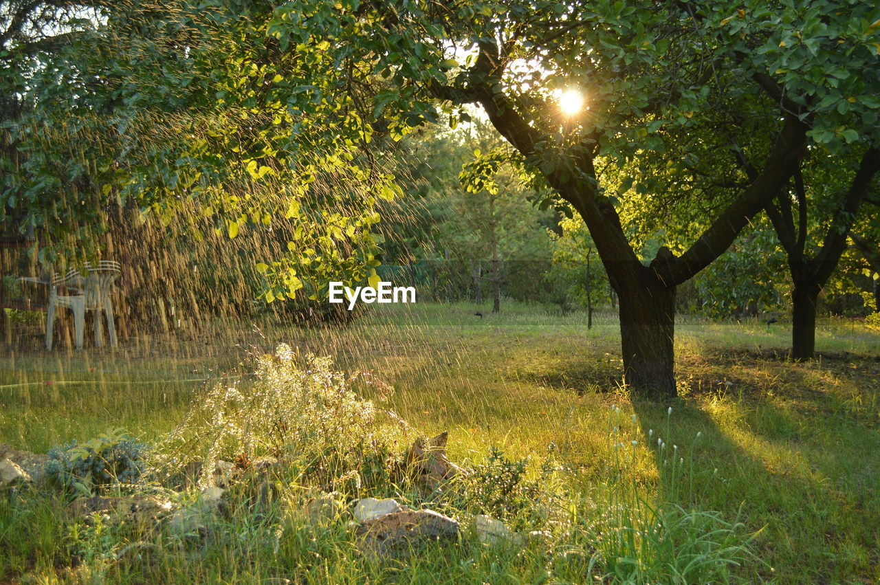 Plant Raindrops Sunlight Tranquility Tree Beauty In Nature Day Forest Grass Nature No People Outdoors Summer Sunbeam Sunset Tranquil Scene Water