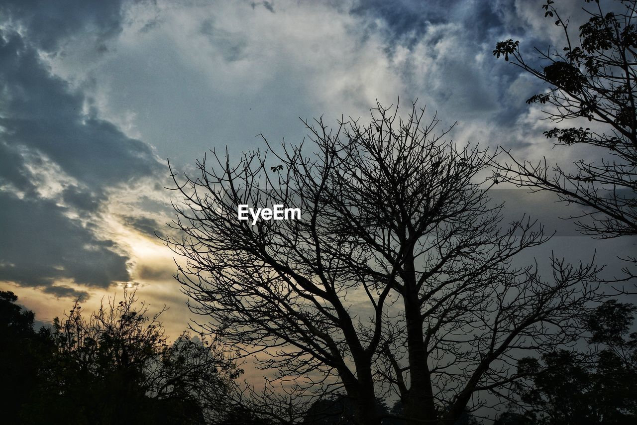 tree, sky, low angle view, cloud - sky, silhouette, nature, bare tree, beauty in nature, outdoors, branch, tranquil scene, no people, tranquility, scenics, growth, day, sunset
