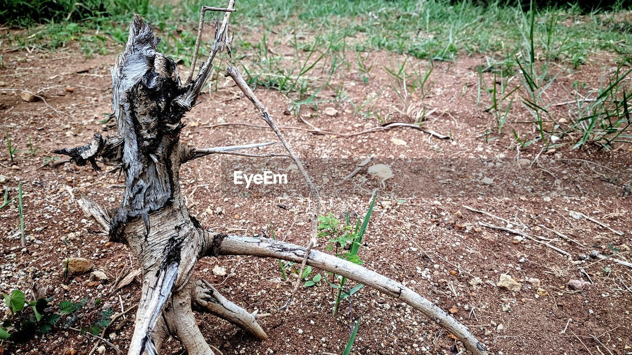 plant, land, tree, nature, no people, field, day, high angle view, animal, forest, tree trunk, non-urban scene, animal wildlife, outdoors, tranquility, trunk, damaged, animal themes, wood - material, grass, dead plant, arid climate