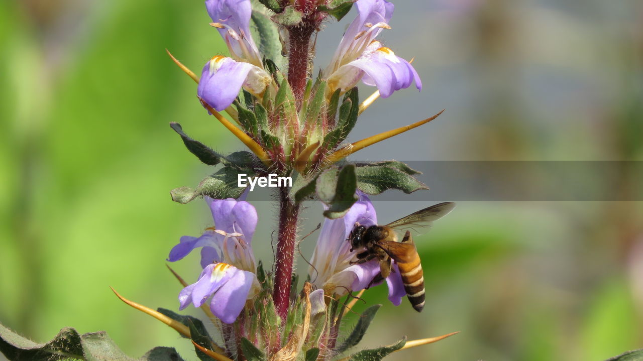flower, flowering plant, fragility, vulnerability, plant, growth, beauty in nature, freshness, petal, insect, invertebrate, close-up, animal themes, one animal, animal wildlife, animal, flower head, animals in the wild, bee, focus on foreground, pollination, purple, no people, outdoors