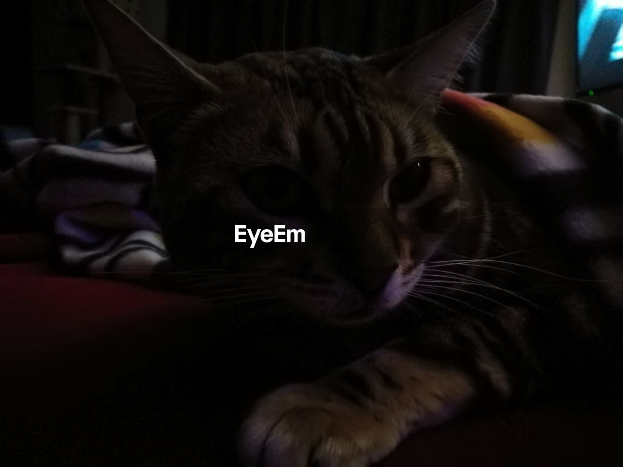 domestic cat, pets, domestic animals, feline, mammal, animal themes, indoors, one animal, no people, close-up, day