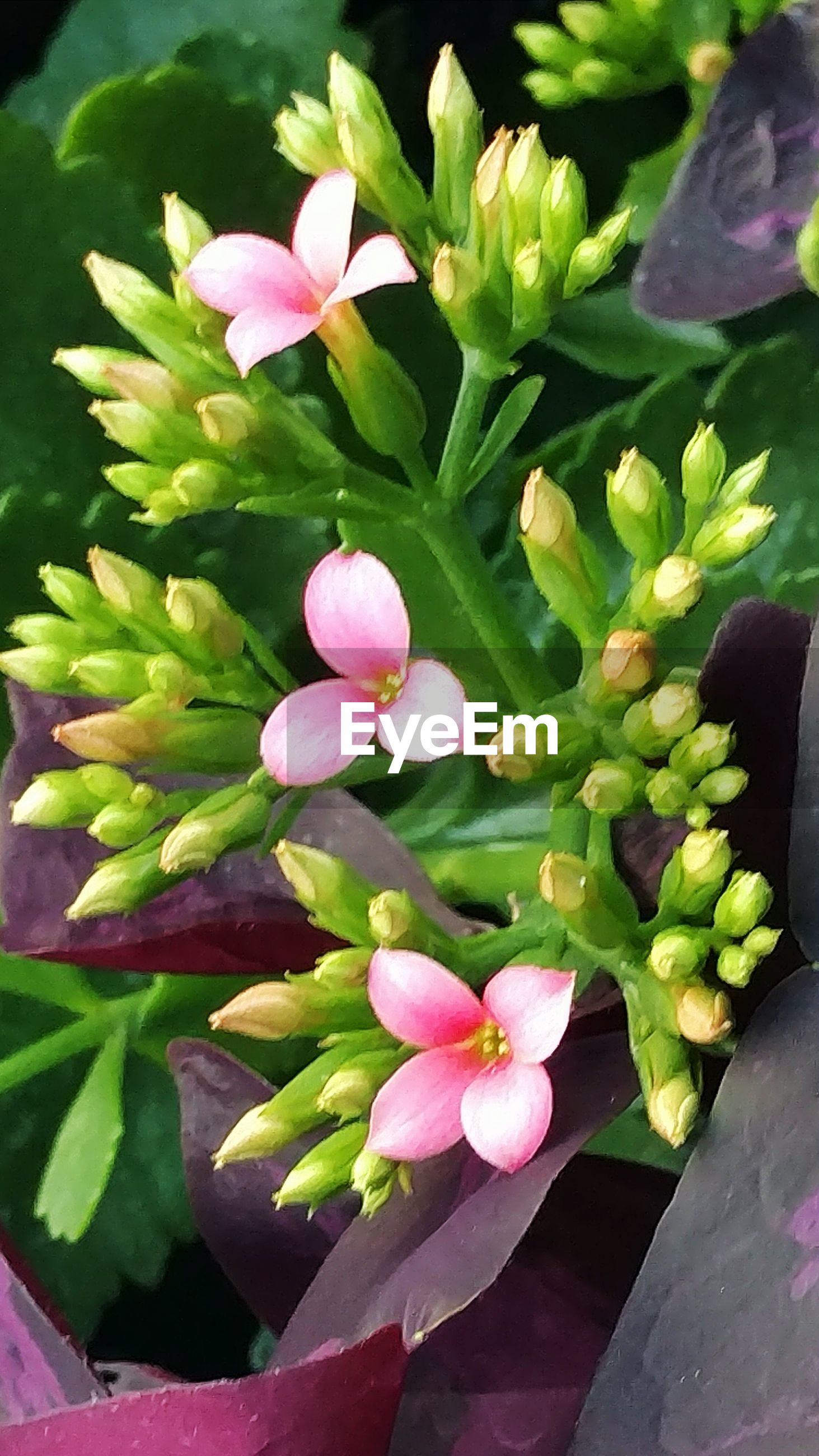 growth, nature, plant, beauty in nature, green color, fragility, flower, outdoors, freshness, leaf, no people, day, close-up, water, flower head