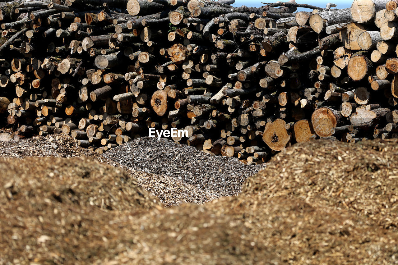 STACK OF LOGS ON TREE IN FOREST