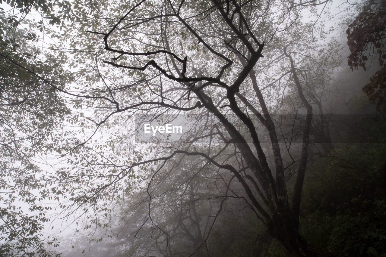 tree, branch, nature, beauty in nature, outdoors, no people, tranquility, low angle view, forest, day, scenics, tranquil scene, fog, growth, landscape, bare tree, sky, freshness