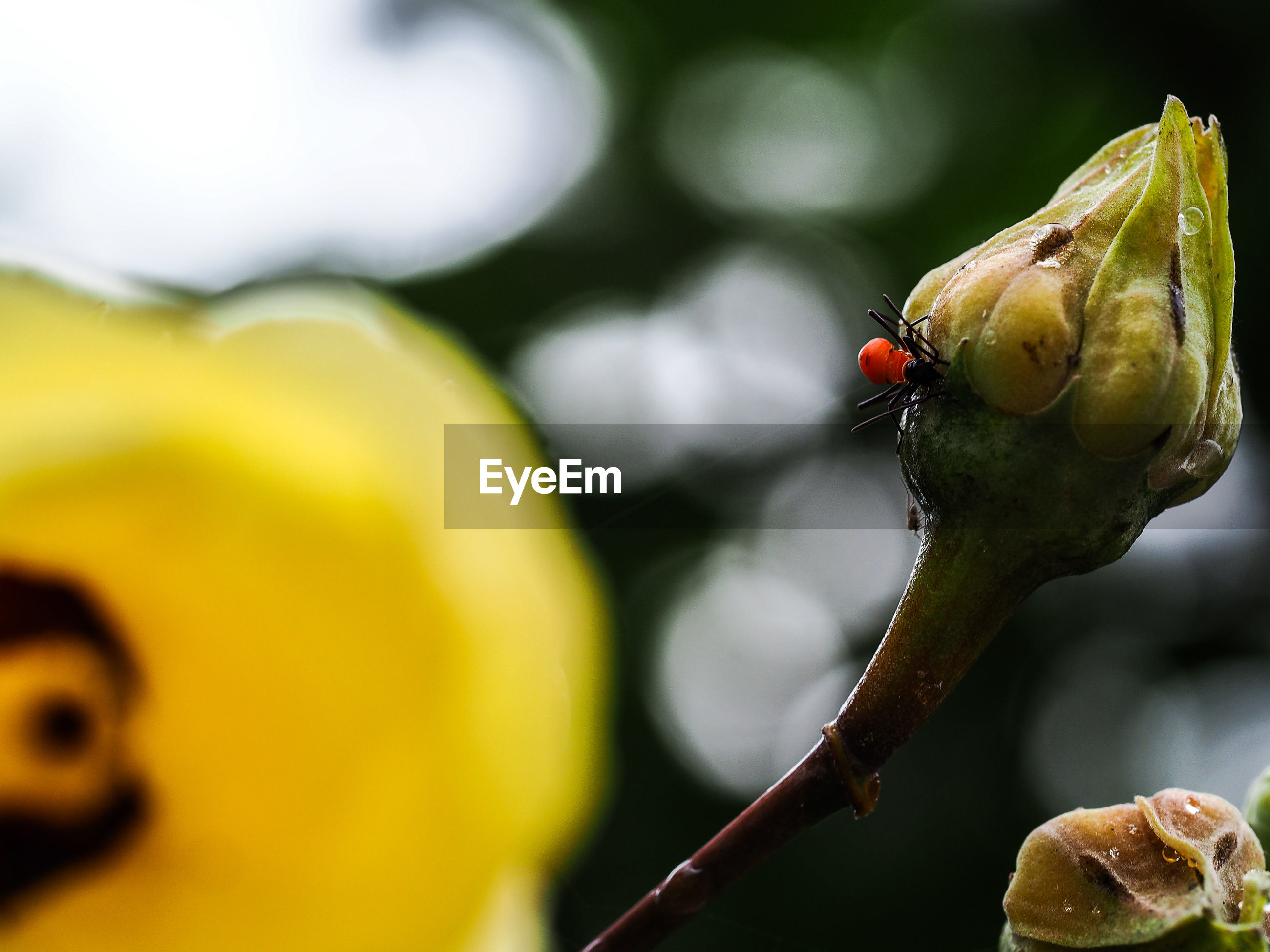 Close-up of insect on bud