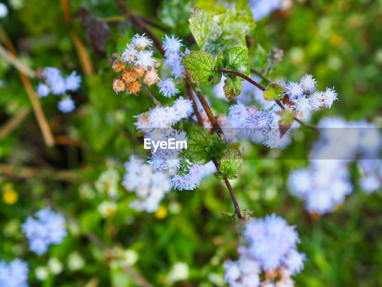flowering plant, flower, plant, vulnerability, fragility, growth, beauty in nature, freshness, close-up, day, nature, focus on foreground, selective focus, flower head, no people, inflorescence, petal, outdoors, botany, plant part, purple