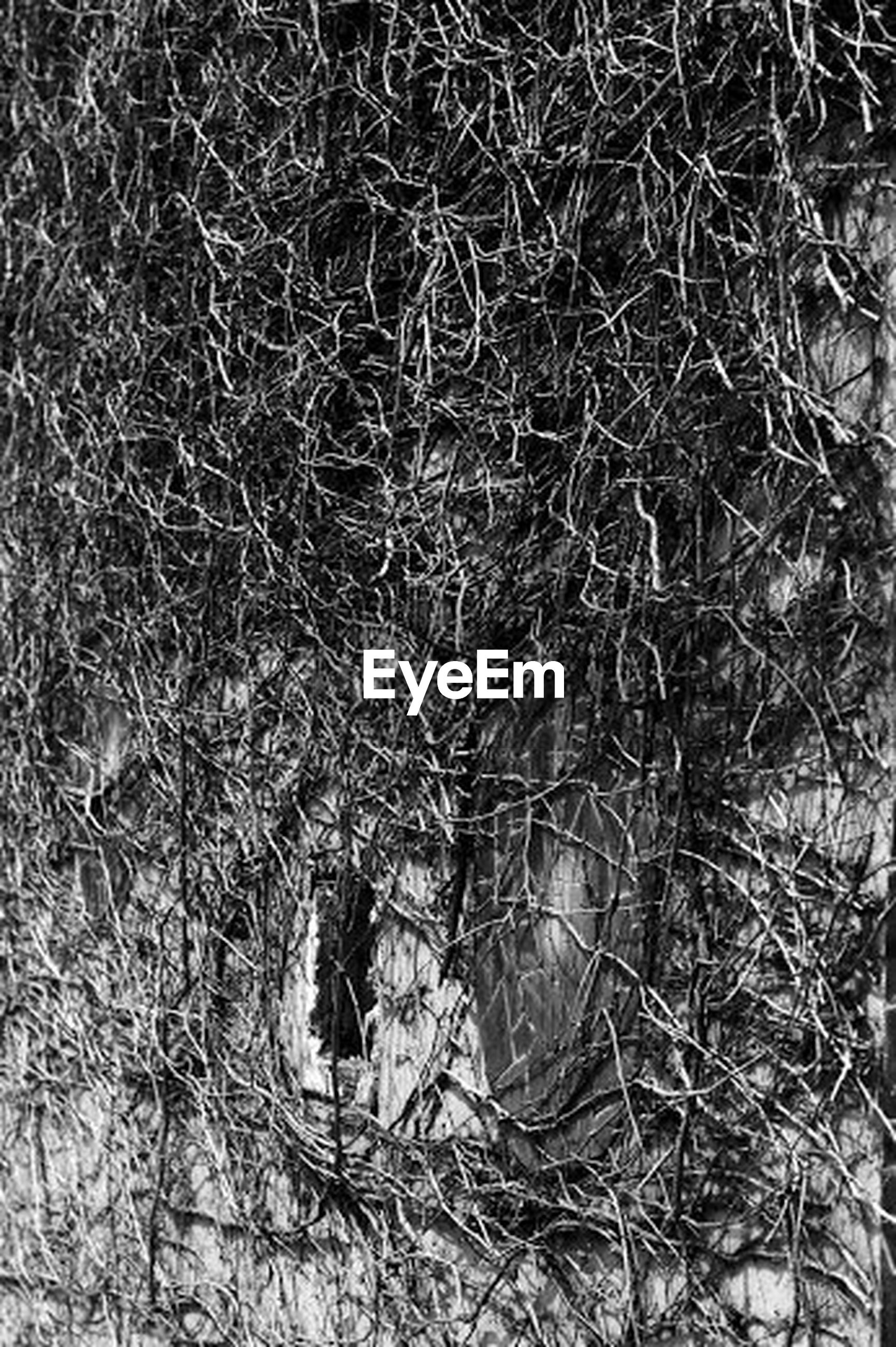 bare tree, branch, tree, growth, nature, winter, dry, plant, cold temperature, dead plant, twig, tranquility, outdoors, forest, day, no people, field, snow, high angle view, tree trunk