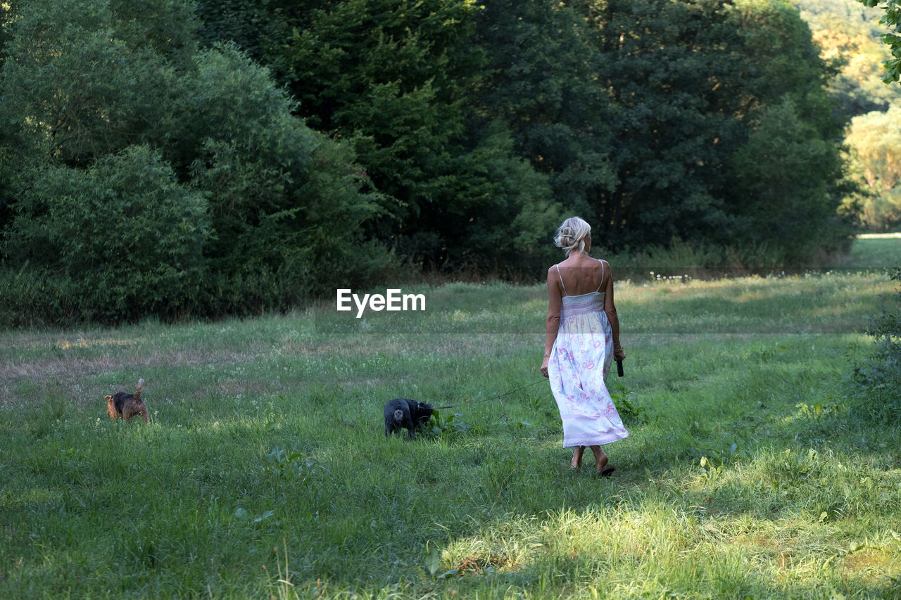 Full length rear view of woman with dogs walking on grassland