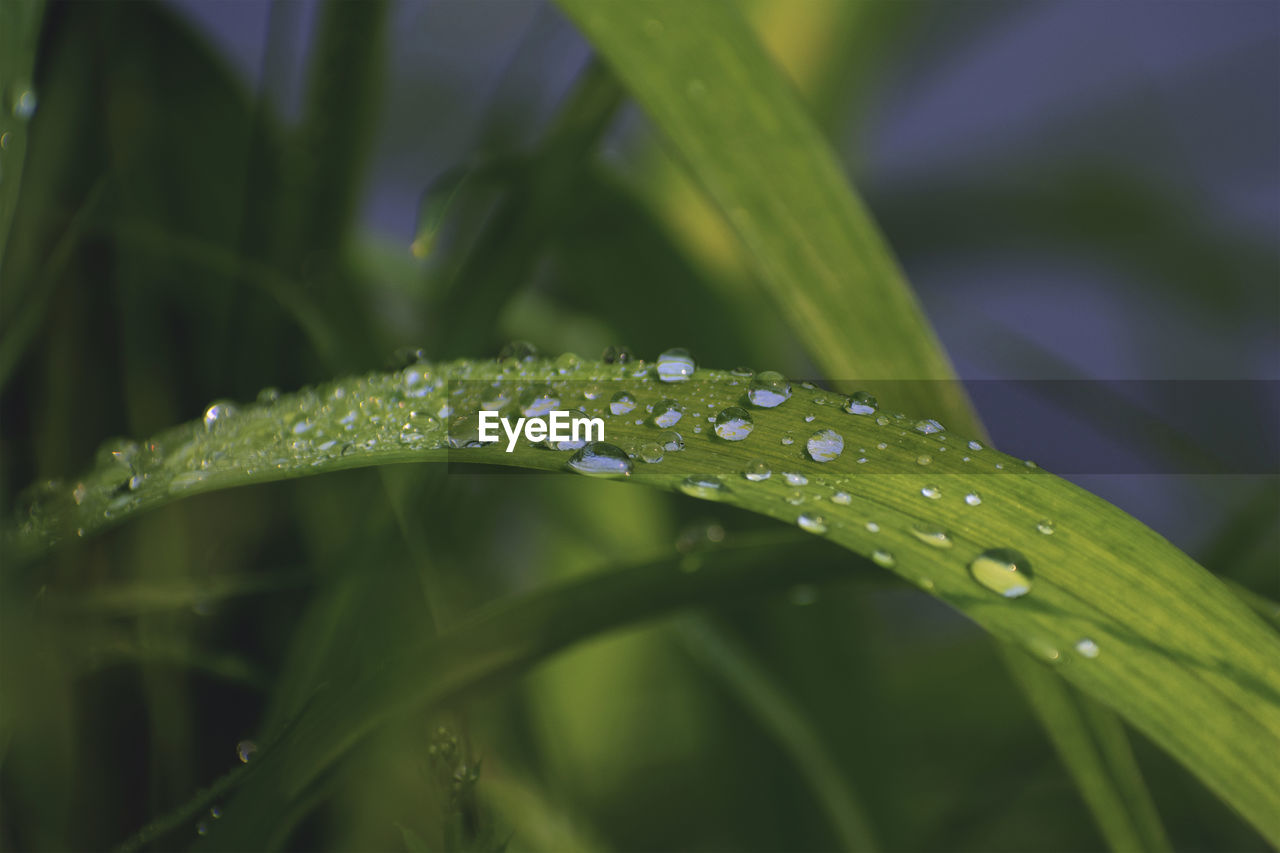 drop, water, wet, plant, growth, green color, close-up, beauty in nature, freshness, nature, plant part, leaf, selective focus, no people, vulnerability, dew, fragility, blade of grass, rain, outdoors, purity, raindrop, rainy season, leaves