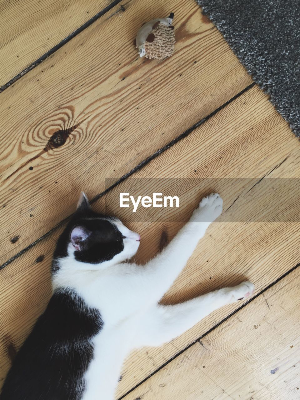 High Angle View Of Cat On Wood