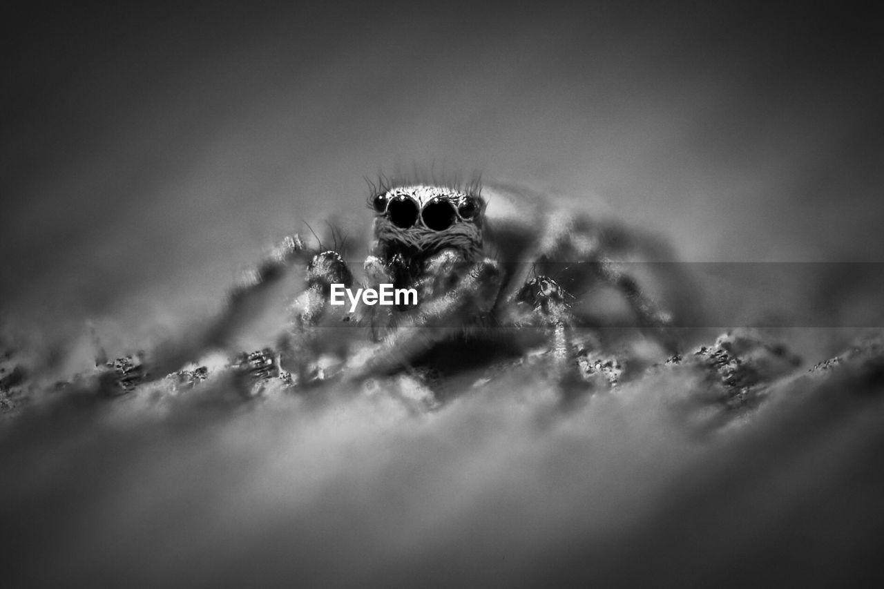 Close-Up Of Spider On Ground