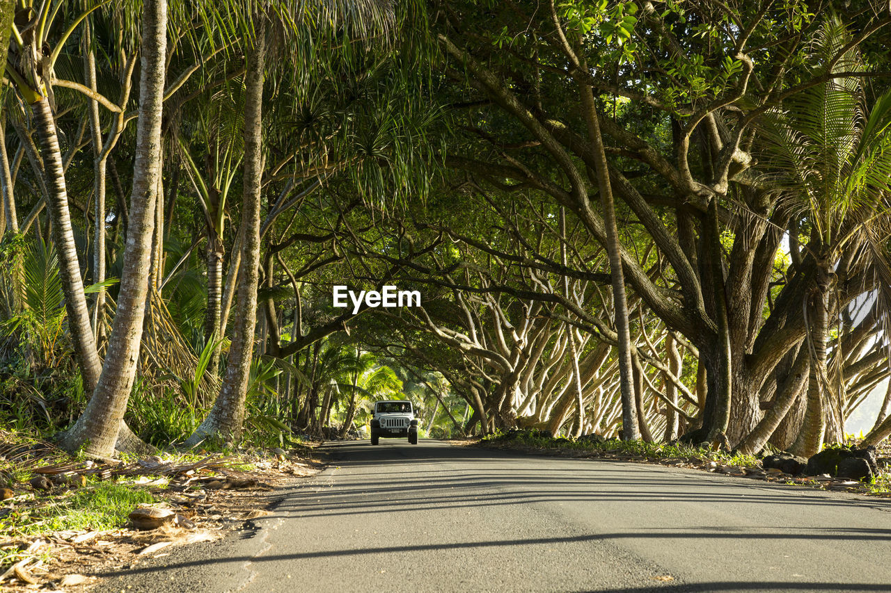 tree, road, transportation, the way forward, car, street, outdoors, tree trunk, day, no people, branch, nature, shadow