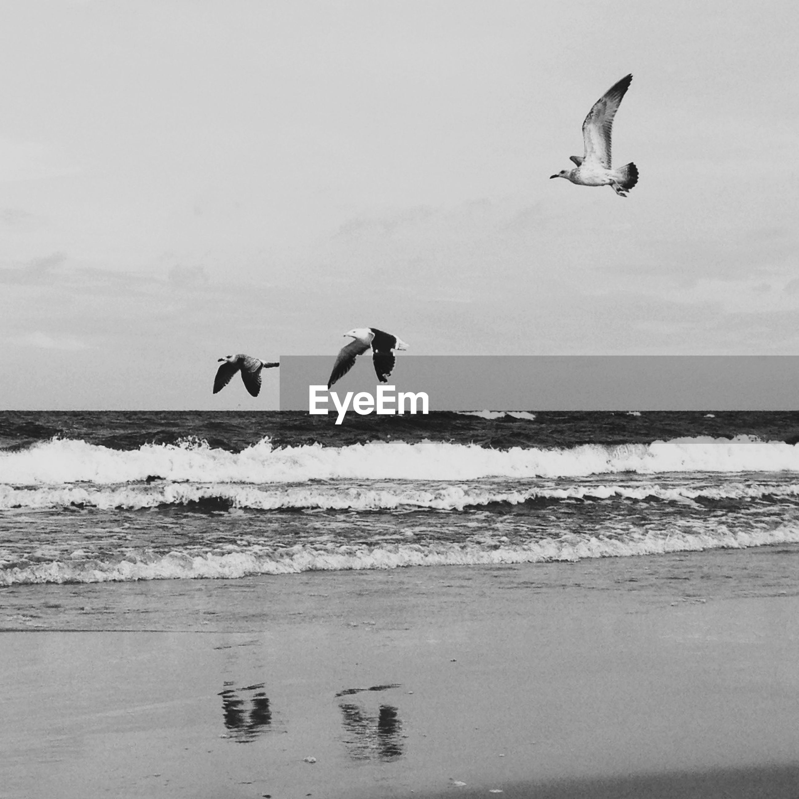Seagulls by sea