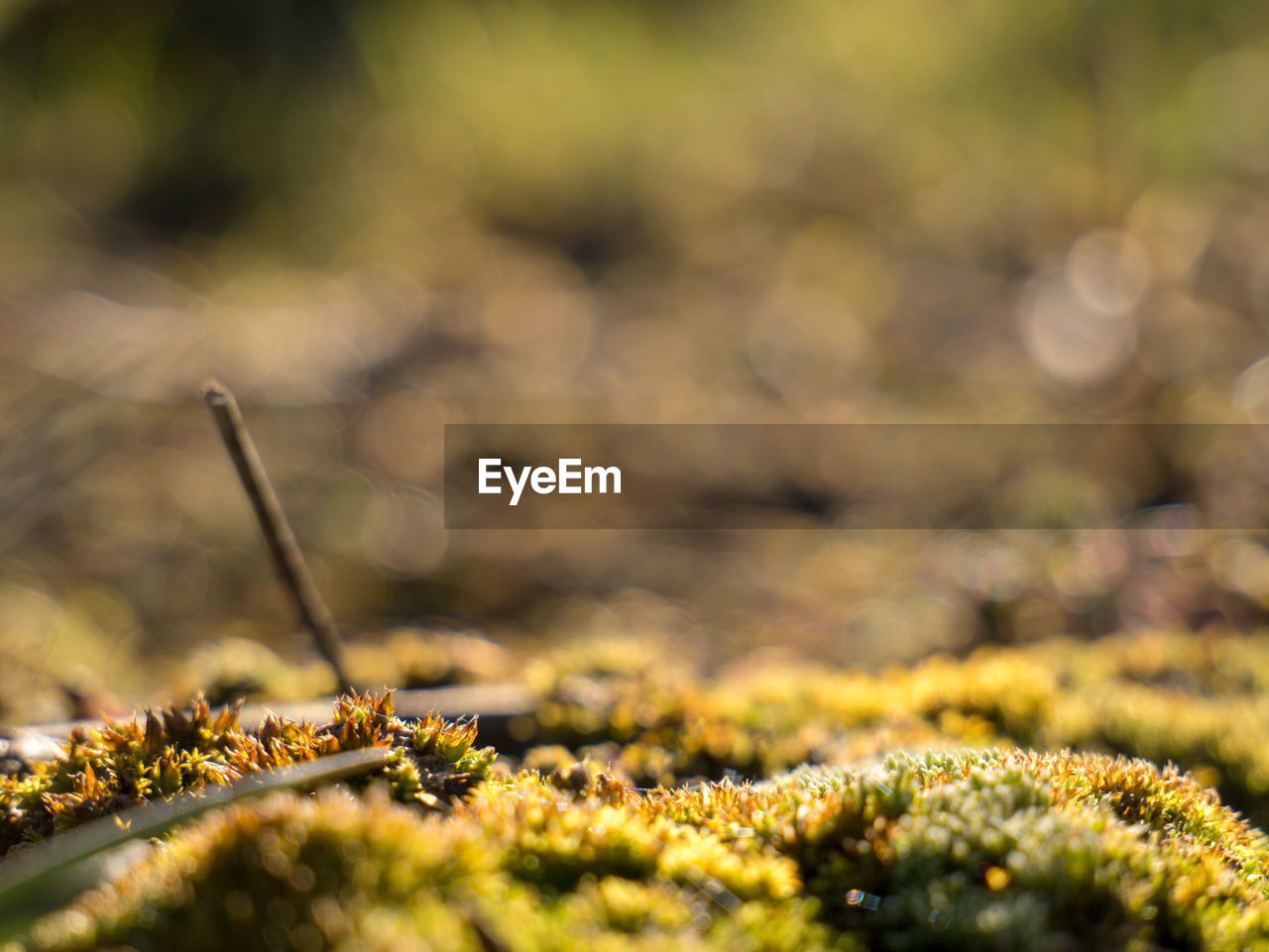 selective focus, plant, nature, growth, close-up, day, no people, field, beauty in nature, moss, sunlight, land, green color, outdoors, tranquility, grass, dry, surface level, yellow, plant part, lichen