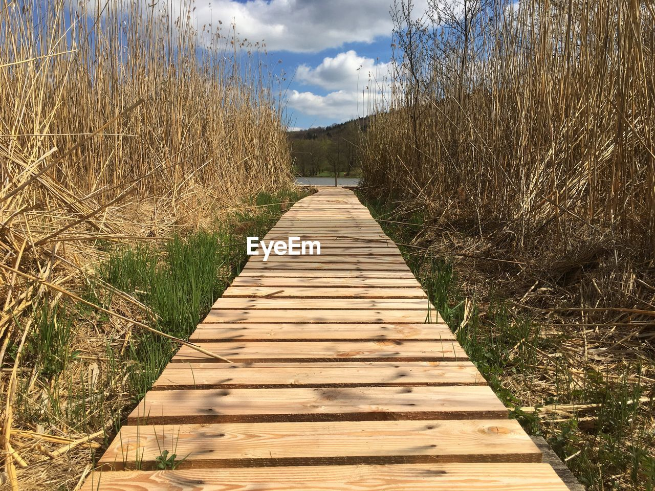 plant, direction, the way forward, nature, wood - material, tree, sky, no people, day, tranquility, diminishing perspective, land, footpath, cloud - sky, boardwalk, outdoors, growth, tranquil scene, grass, sunlight, wood, wood paneling