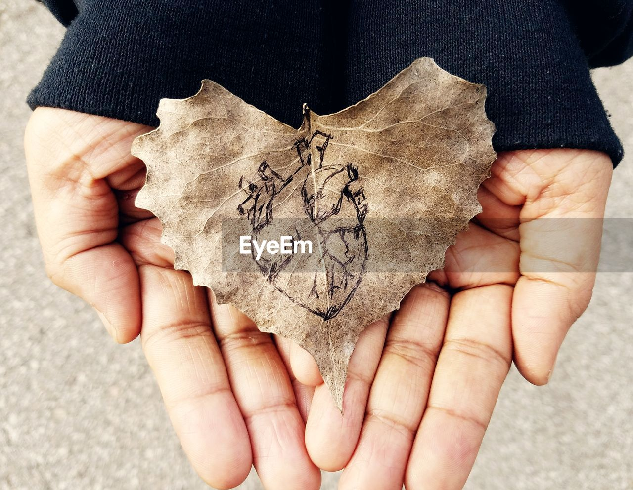 Cropped Hands Of Person Holding Leaf With Human Heart Sketch On It