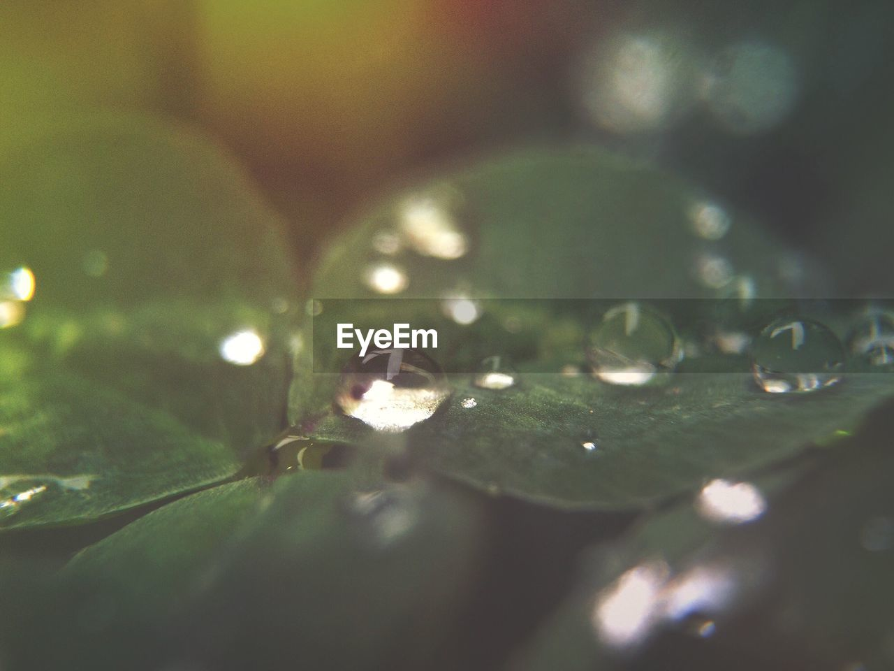 selective focus, drop, leaf, water, green color, close-up, nature, beauty in nature, no people, wet, fragility, raindrop, growth, freshness, purity, outdoors, day