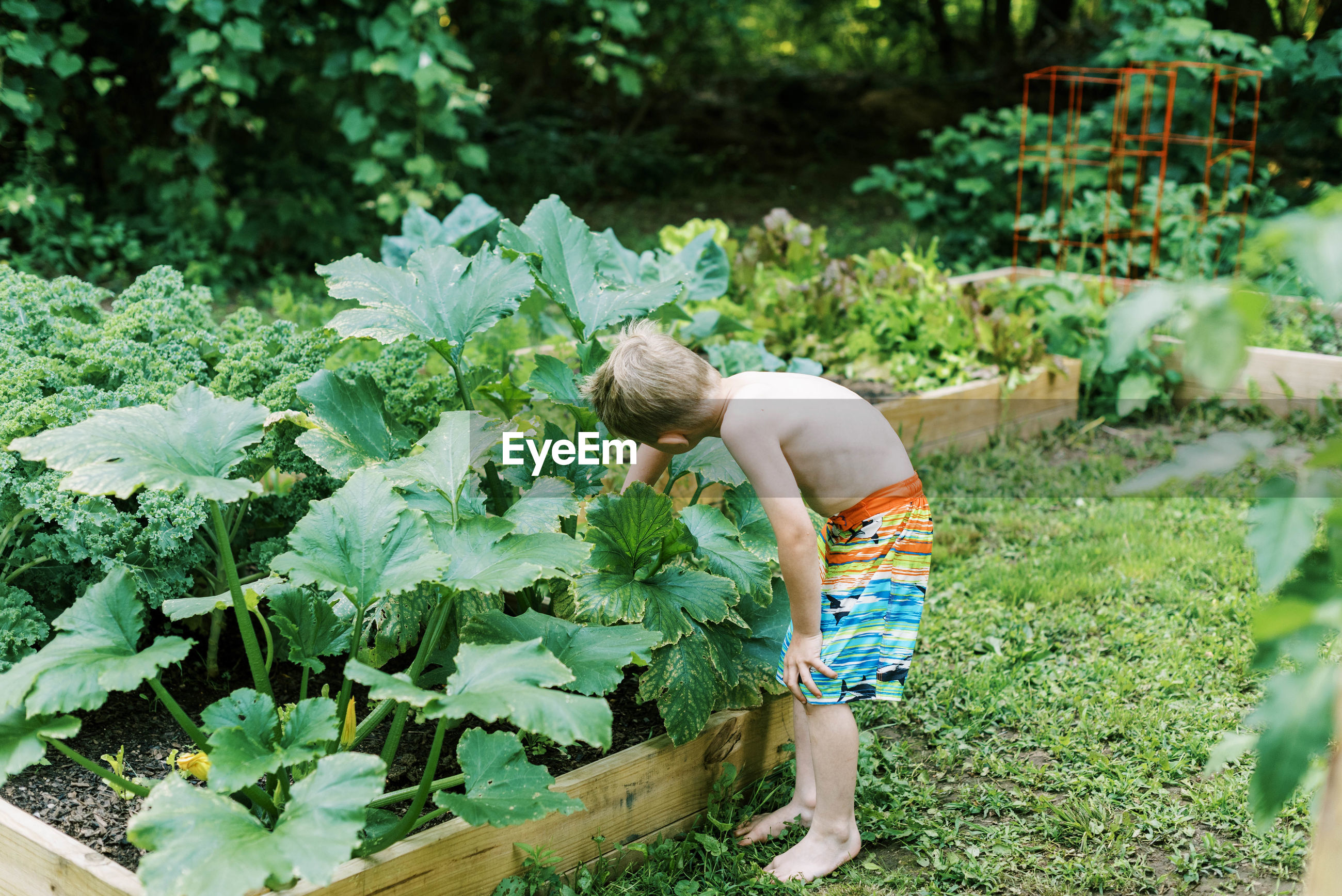 REAR VIEW OF BOY WITH VEGETABLES ON PLANT