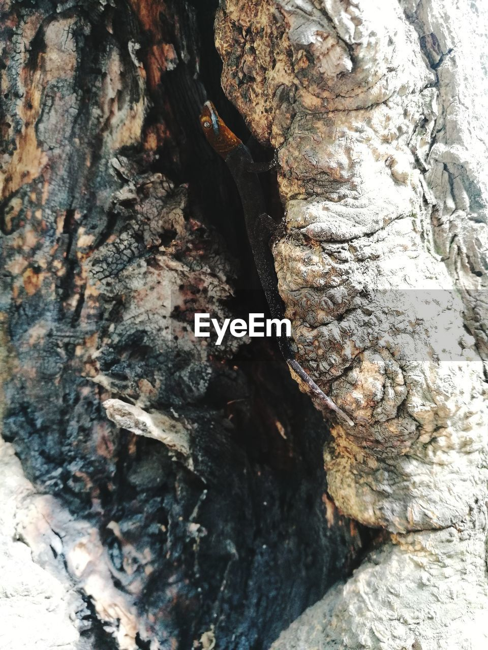 textured, tree trunk, rough, no people, close-up, bark, day, nature, backgrounds, outdoors, full frame, animals in the wild, tree, animal themes