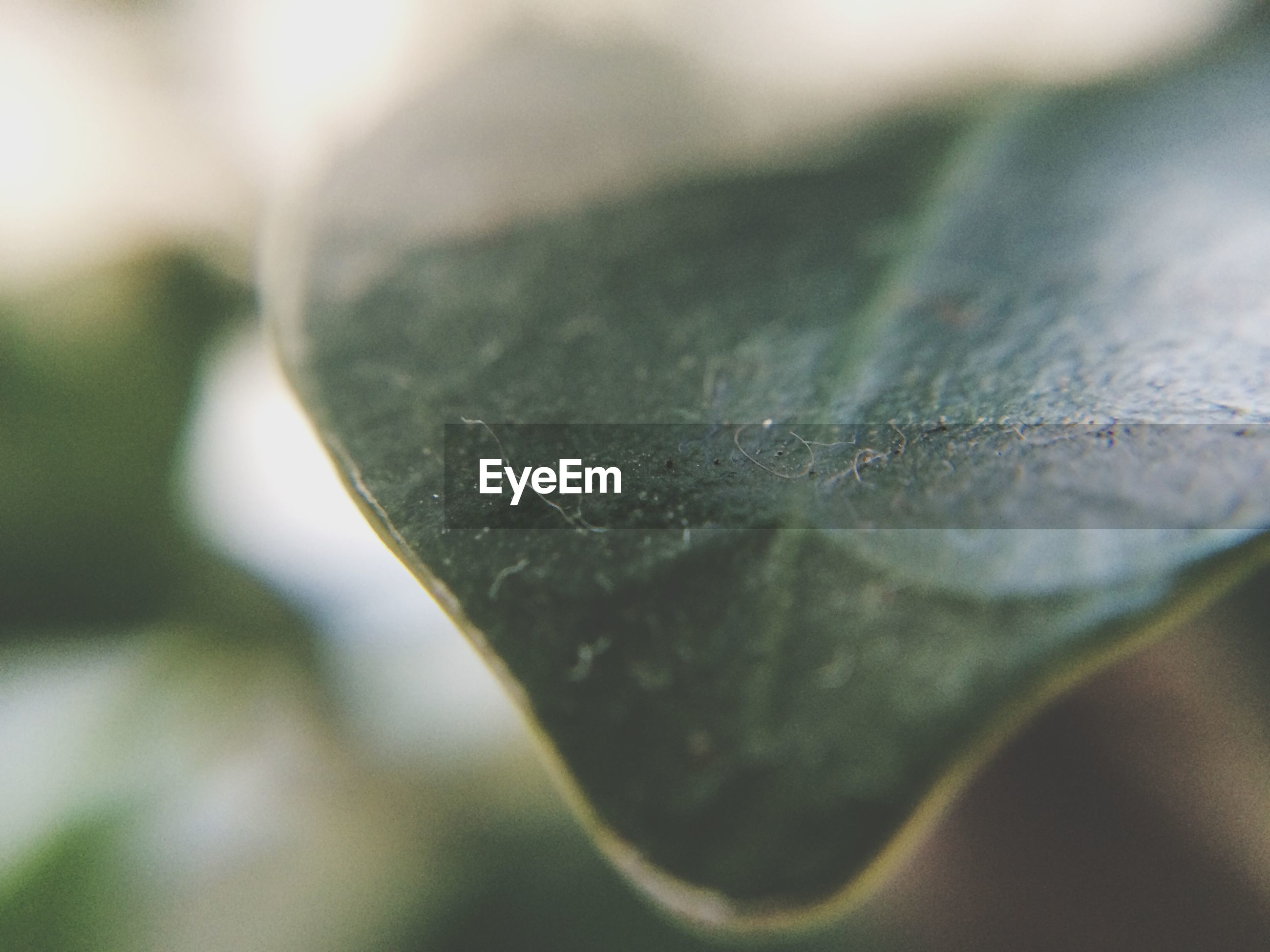 selective focus, close-up, focus on foreground, extreme close-up, detail, macro, textured, nature, leaf, surface level, growth, no people, day, fragility, extreme close up, outdoors, single object, natural pattern, pattern, leaf vein