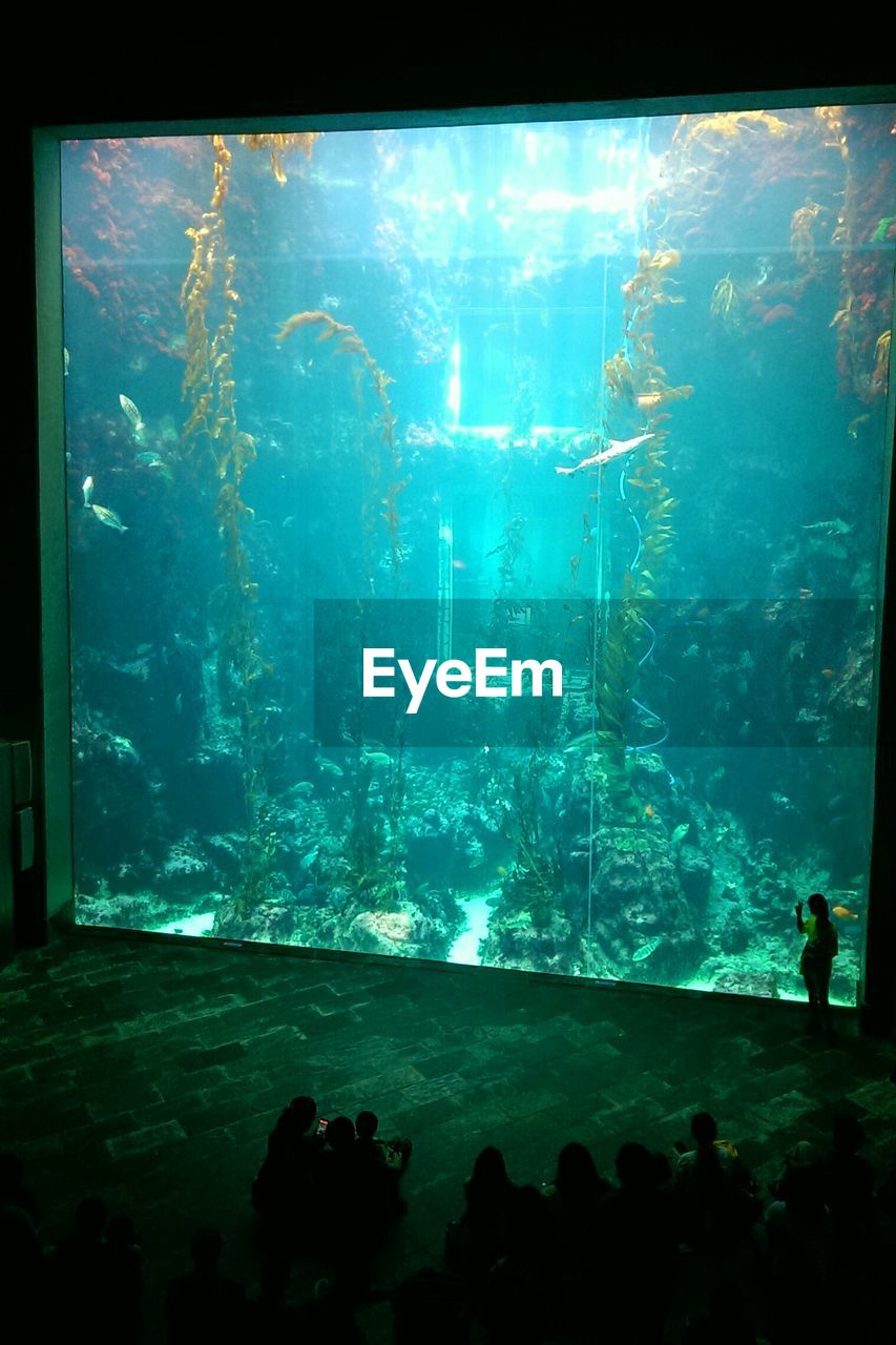 aquarium, fish, sea life, underwater, large group of animals, animal themes, indoors, animals in captivity, water, swimming, real people, silhouette, nature, animals in the wild, undersea, day