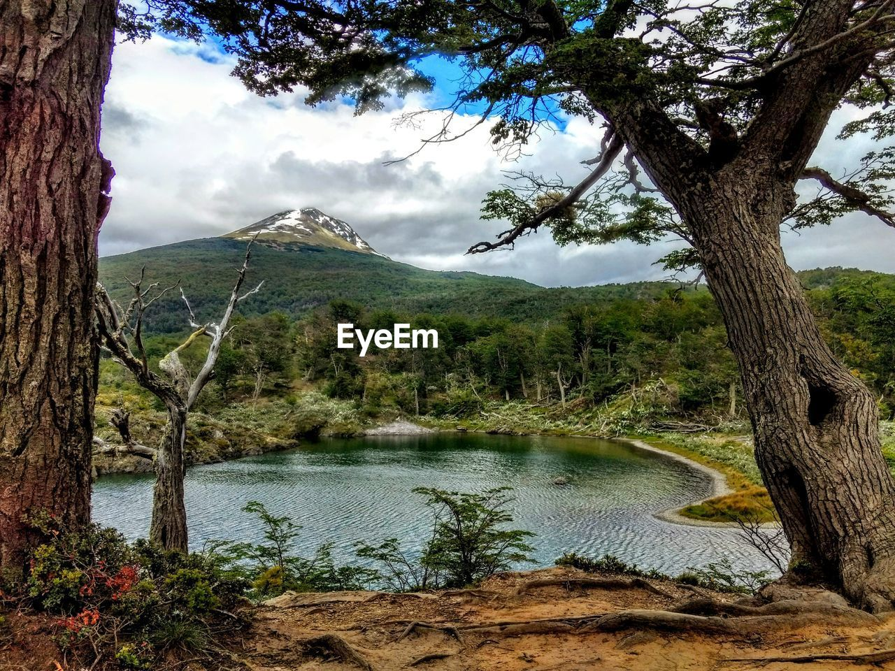 tree, mountain, nature, tree trunk, beauty in nature, sky, scenics, tranquil scene, landscape, no people, cloud - sky, day, outdoors, tranquility, water, lake, growth, mountain range, branch