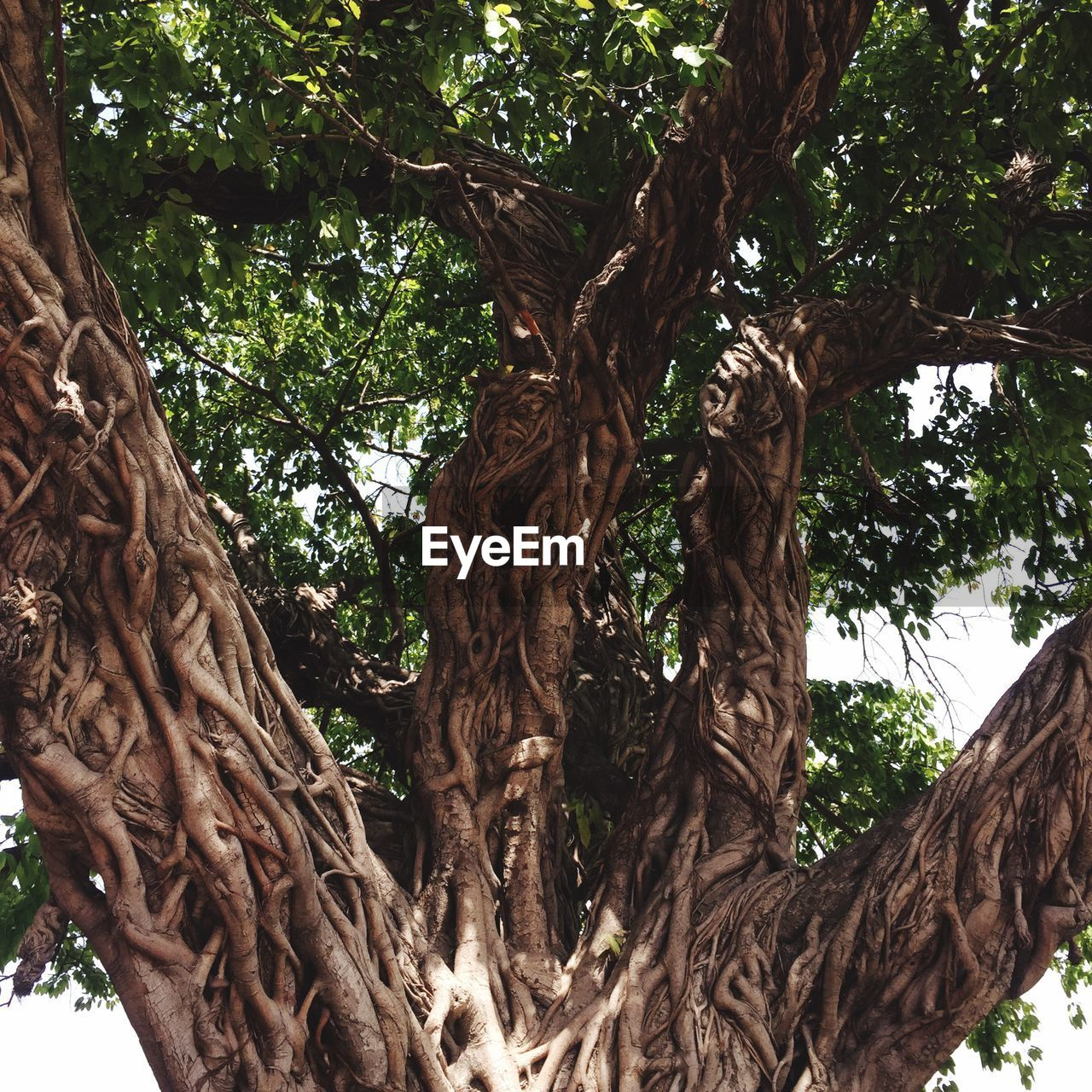 tree, plant, trunk, tree trunk, growth, day, low angle view, no people, nature, branch, forest, brown, outdoors, tranquility, beauty in nature, textured, tropical climate, focus on foreground, plant part, root