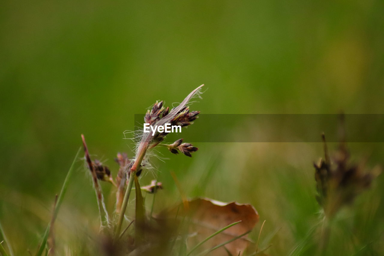 plant, growth, beauty in nature, close-up, selective focus, nature, no people, day, land, field, fragility, vulnerability, tranquility, focus on foreground, plant stem, flower, brown, outdoors, green color, flowering plant, wilted plant