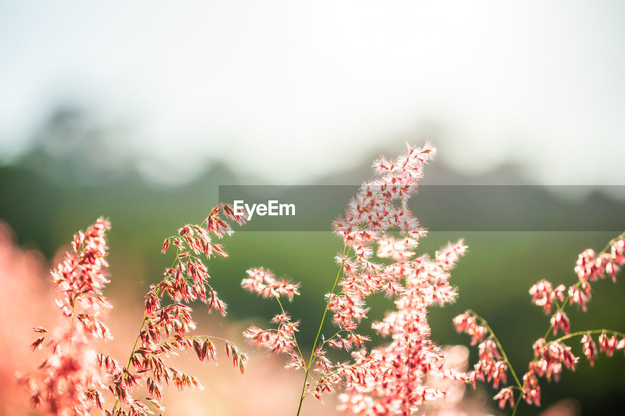 growth, plant, beauty in nature, close-up, flower, flowering plant, nature, fragility, no people, vulnerability, day, focus on foreground, freshness, selective focus, tranquility, outdoors, sunlight, sky, field, flower head