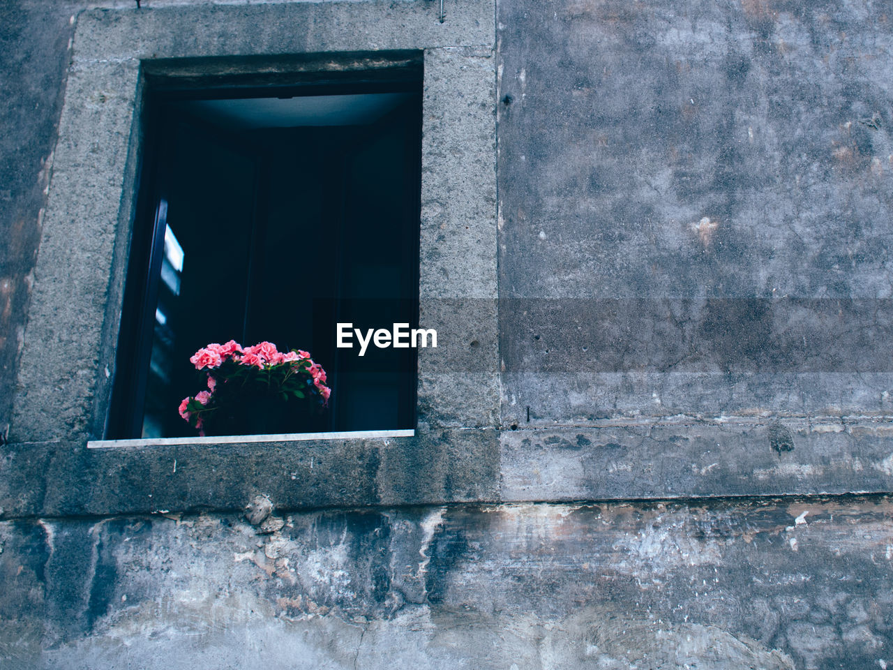 flower, window, rose - flower, day, no people, outdoors, plant, architecture, growth, flower head, nature, fragility, close-up