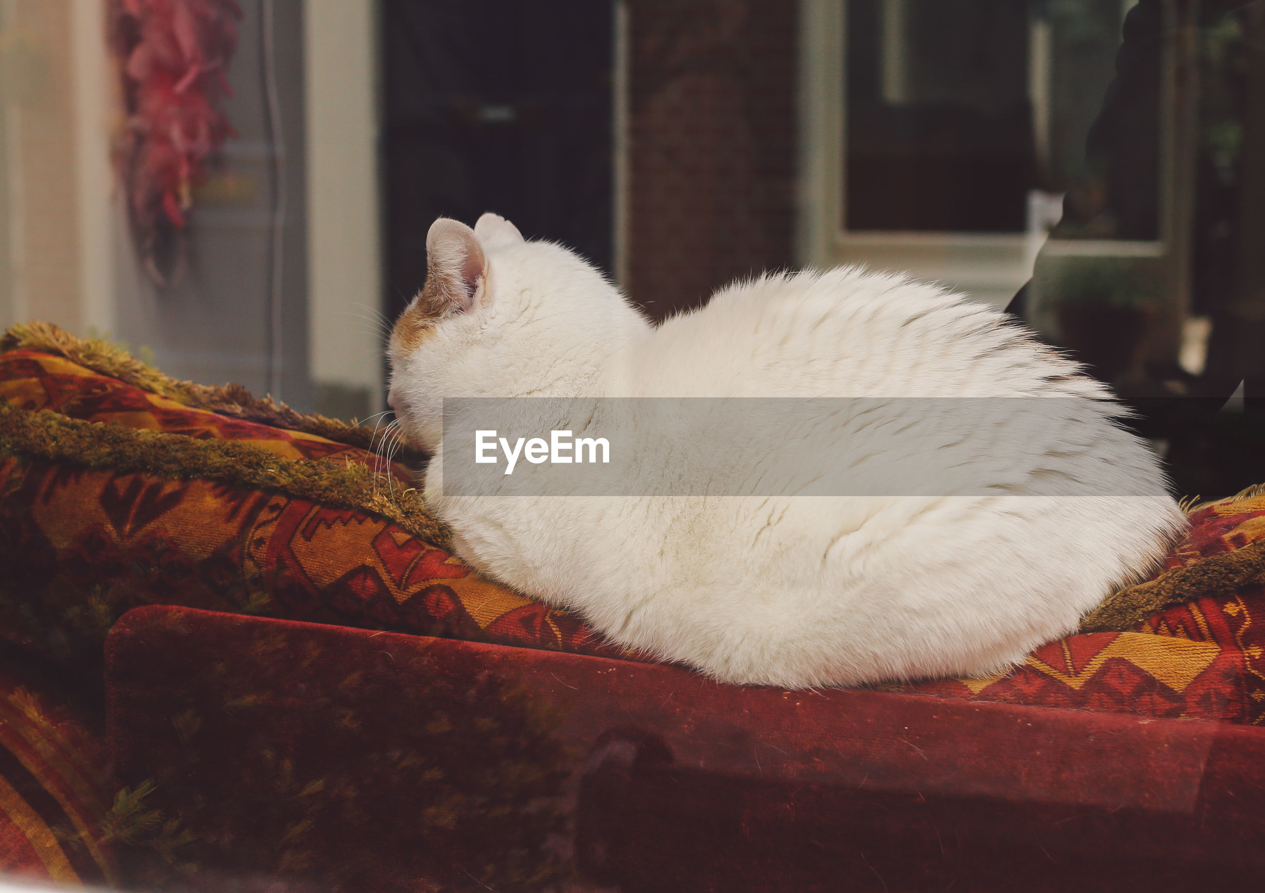 White cat sitting on sofa at home