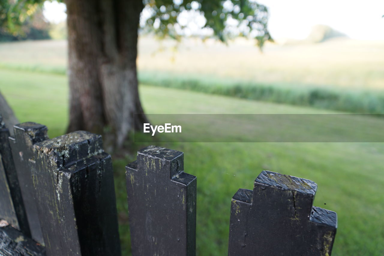 tree, grass, focus on foreground, plant, no people, day, barrier, land, fence, field, wood - material, boundary, protection, nature, outdoors, security, close-up, green color, safety, metal, wooden post
