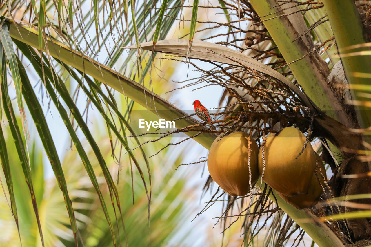 plant, animals in the wild, animal wildlife, no people, fruit, food, nature, food and drink, close-up, animal themes, animal, healthy eating, tree, selective focus, growth, day, group of animals, outdoors, freshness, ripe
