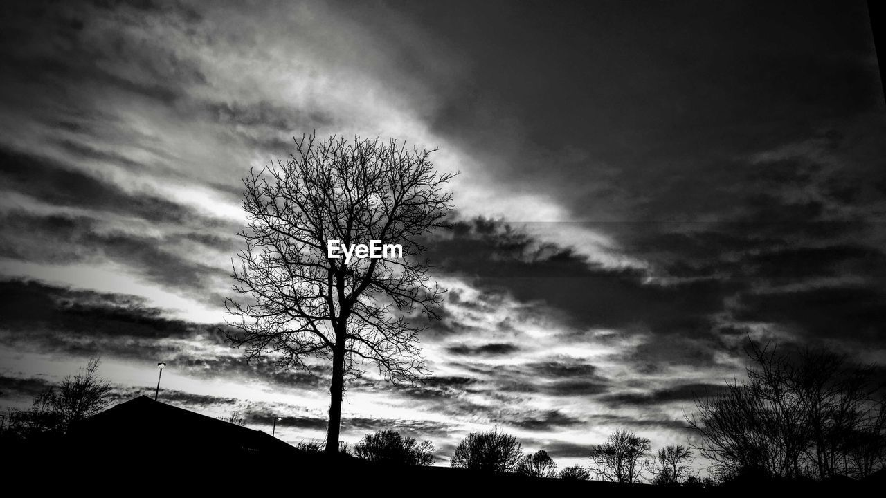 tree, silhouette, sky, cloud - sky, tranquil scene, nature, outdoors, no people, tranquility, bare tree, low angle view, beauty in nature, scenics, sunset, day, branch