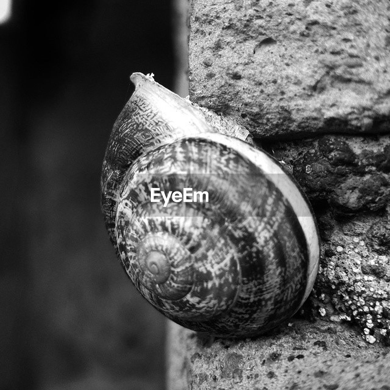 snail, animal shell, animal themes, one animal, animals in the wild, gastropod, wildlife, close-up, no people, day, outdoors, nature