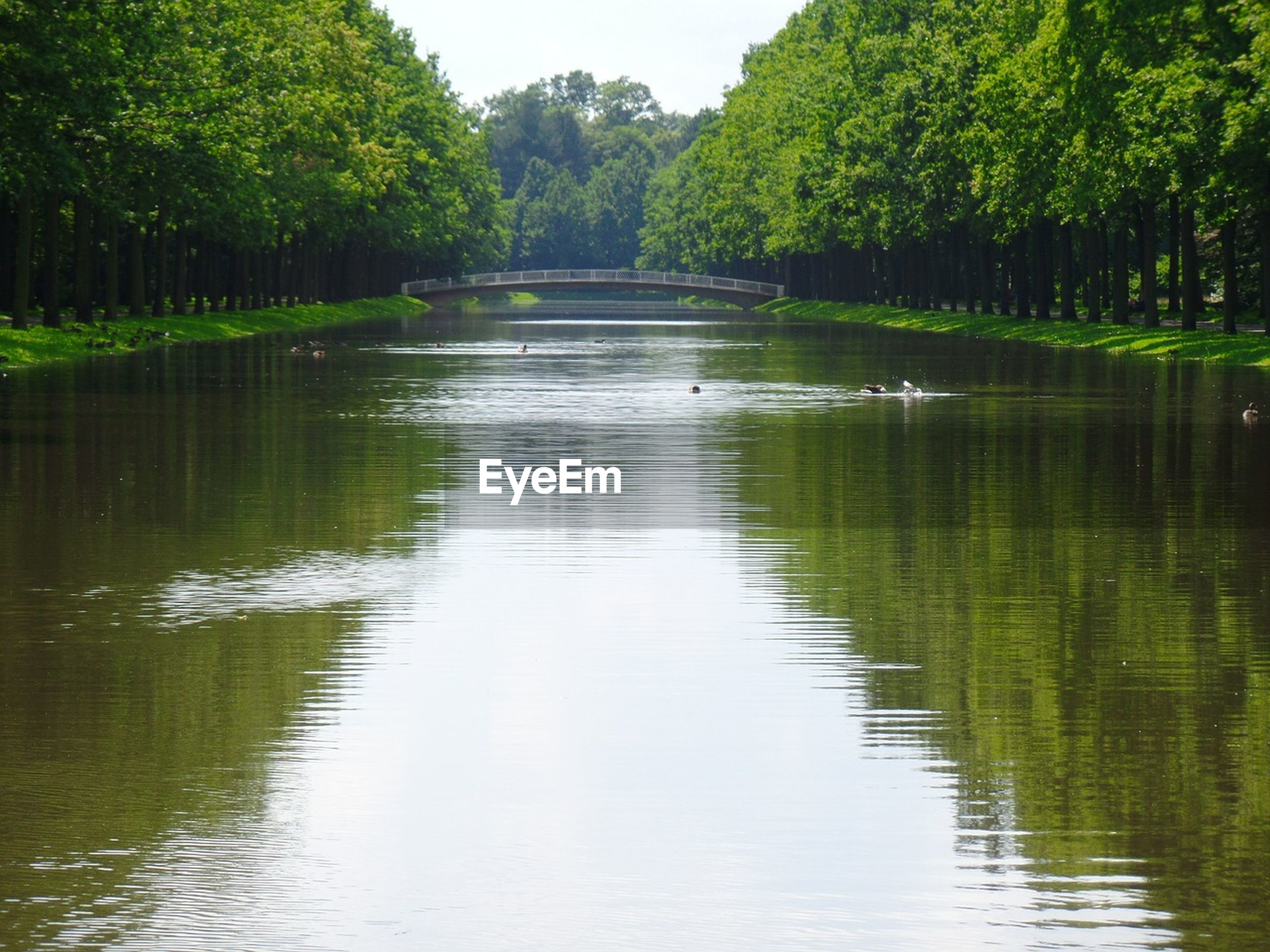 SCENIC VIEW OF LAKE WITH TREES IN BACKGROUND
