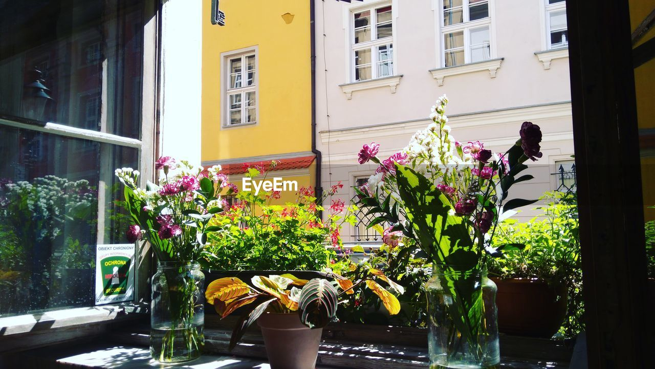 plant, flower, building exterior, architecture, flowering plant, built structure, growth, window, nature, potted plant, building, day, freshness, vulnerability, fragility, beauty in nature, outdoors, yellow, flower pot, no people, flower head, window box, gardening, flower arrangement, houseplant