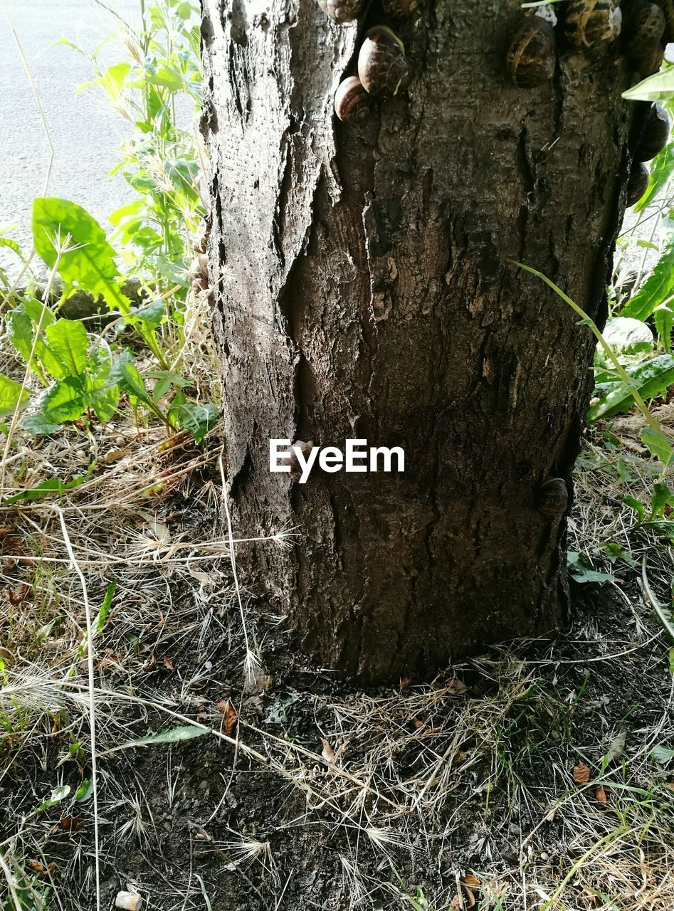 tree trunk, tree, day, growth, outdoors, nature, no people, plant, close-up, grass