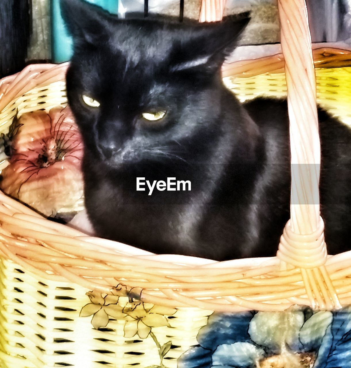 basket, domestic animals, pets, one animal, mammal, animal themes, no people, black color, domestic cat, indoors, feline, close-up, day