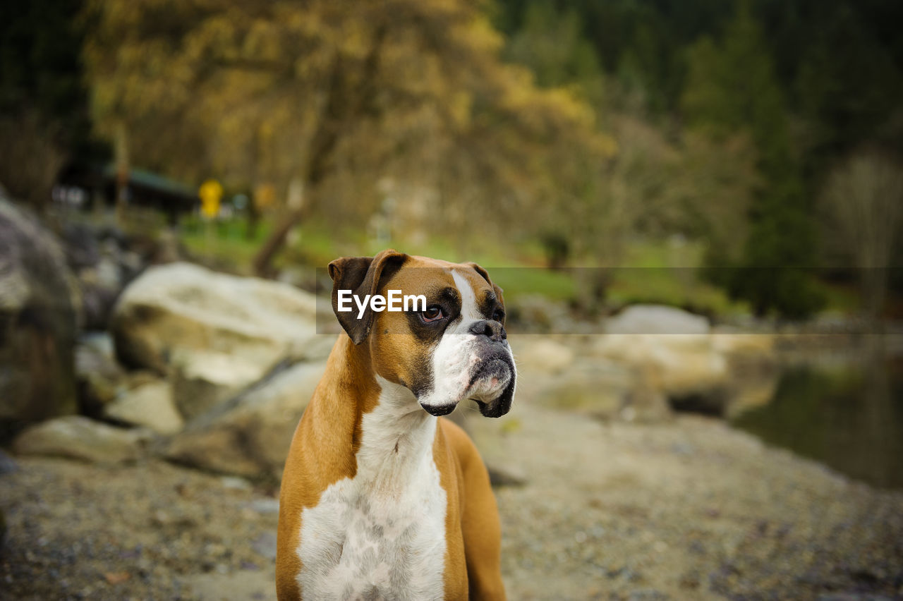 View Of Dog By Rocks