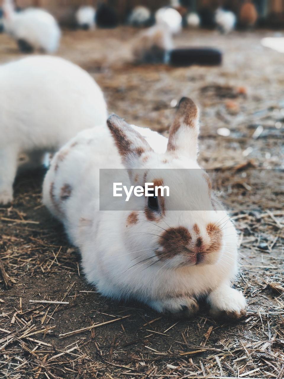 Rabbit sitting on footpath